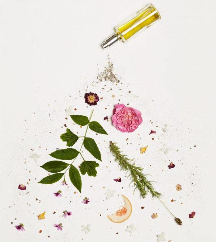 Les ingrédients merveilleux d'Oléa Antica